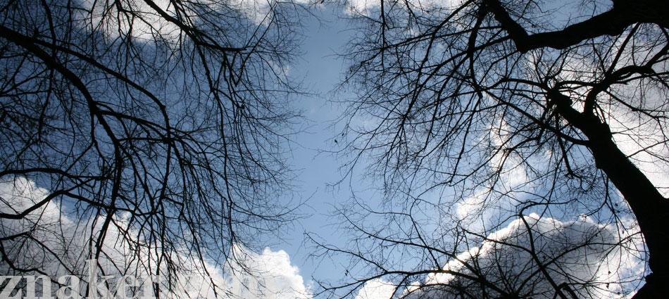 drzewa-niebo-warszawa