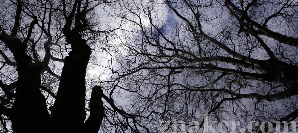 drzewa_niebo-warszawa