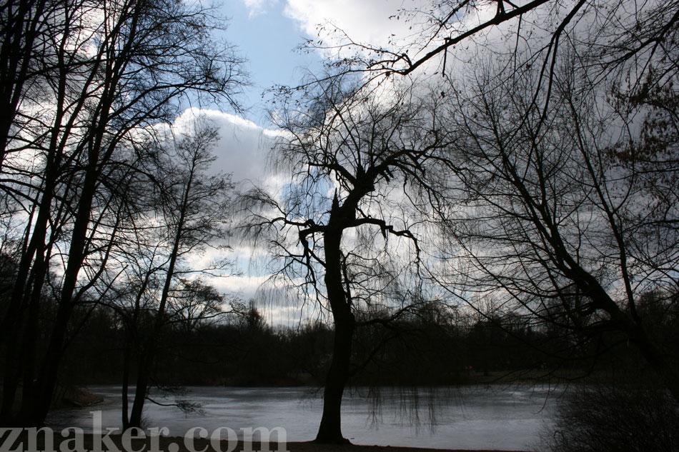 drzewo-skaryszewski-2012