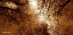 Fotografie drzew na tle nieba w Parku Skaryszewskim