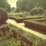 Ogród w Warszawie