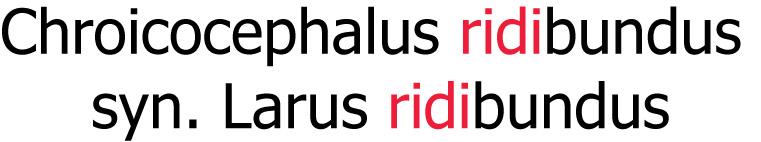 ridibundus_znaker
