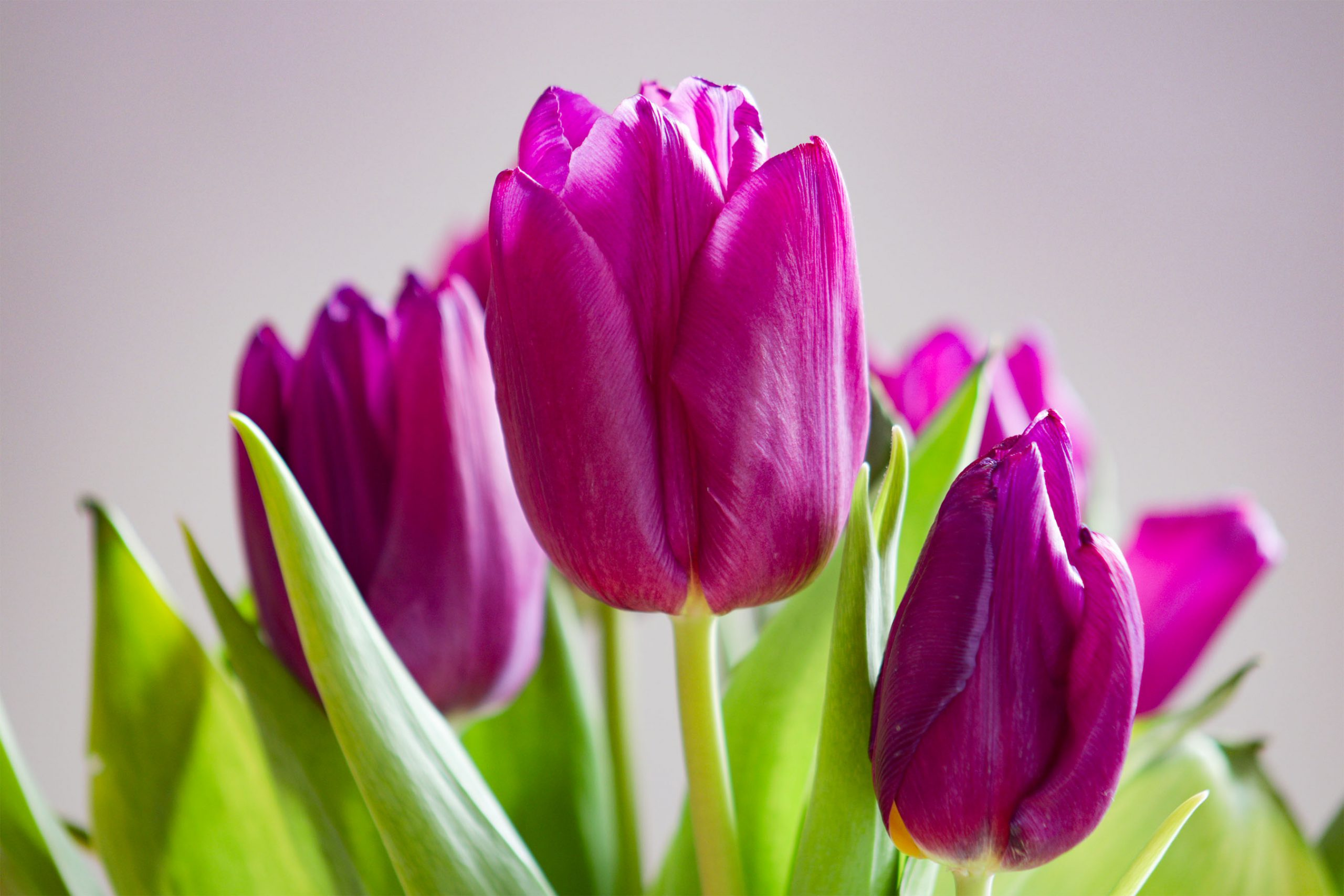 fotograf warszawa kwiaty zdjęcia
